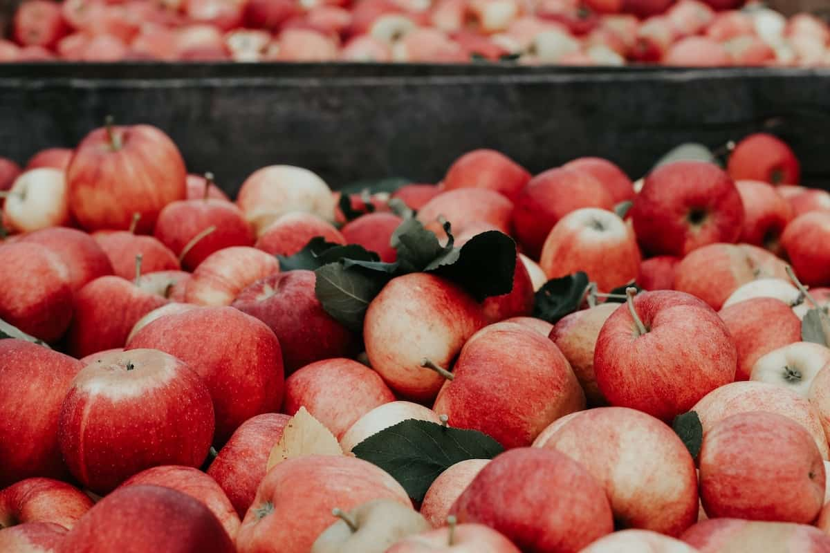 Ekologiska äpplen bäst