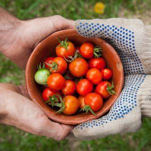 Varför är grönsaker så nyttigt? Få svaret här!
