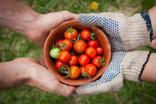 tomater och grönsaker
