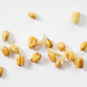 Vetegroddar för håret – Stärkande mikroproteiner för normalt eller tunt hår